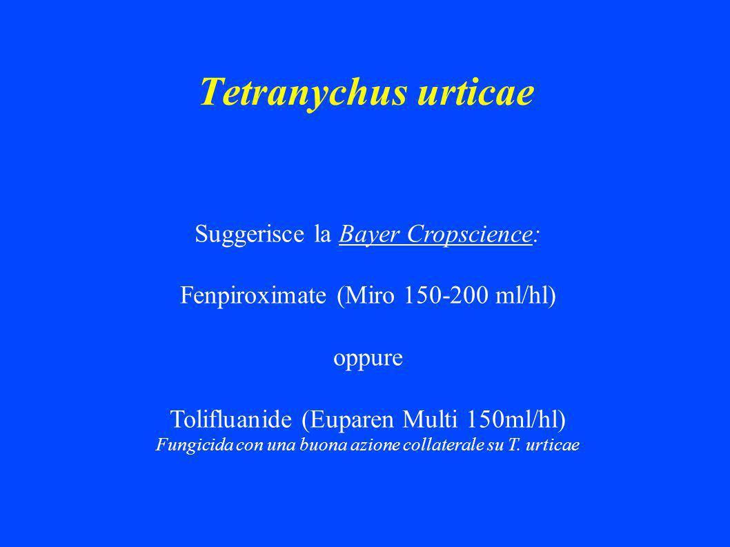 Tetranychus urticae Suggerisce la Bayer Cropscience: Fenpiroximate (Miro 150-200 ml/hl) oppure Tolifluanide (Euparen Multi 150ml/hl) Fungicida con una buona azione collaterale su T.