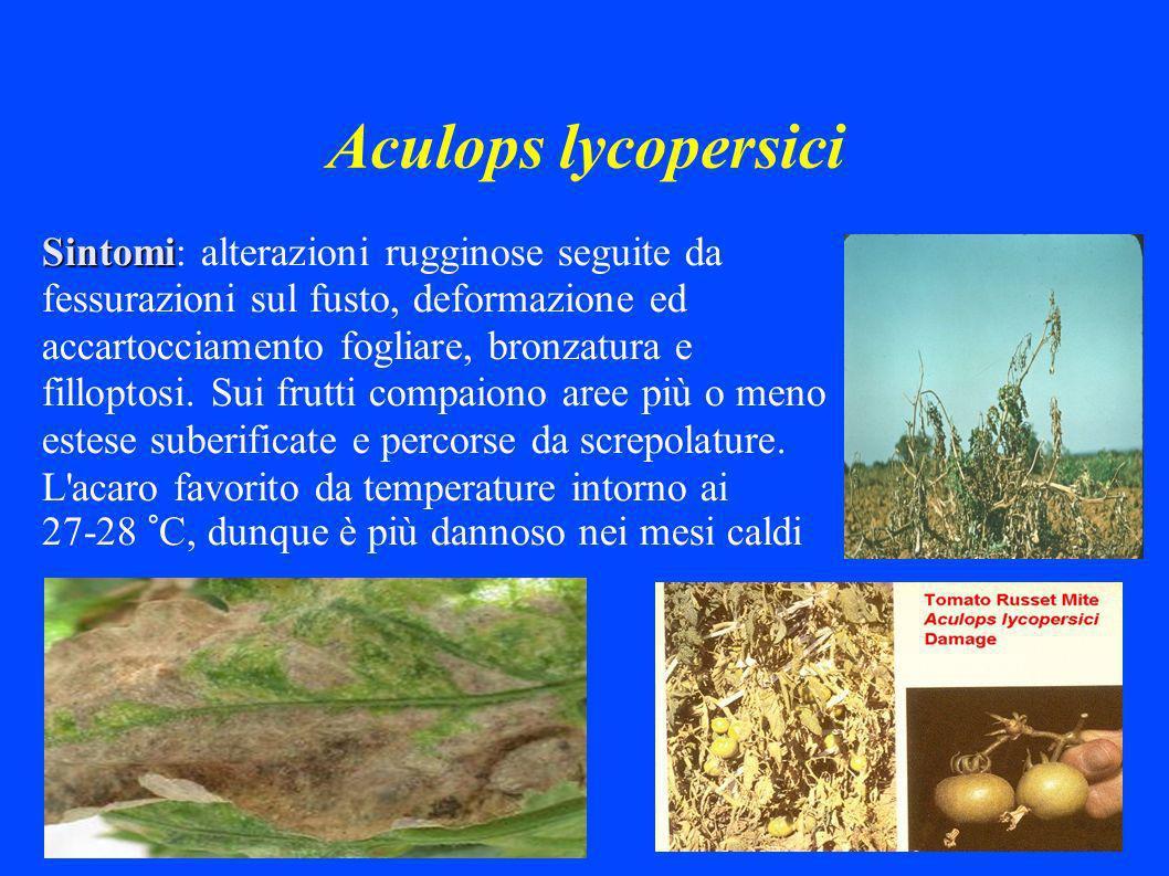 Aculops lycopersici Sintomi Sintomi: alterazioni rugginose seguite da fessurazioni sul fusto, deformazione ed accartocciamento fogliare, bronzatura e filloptosi.