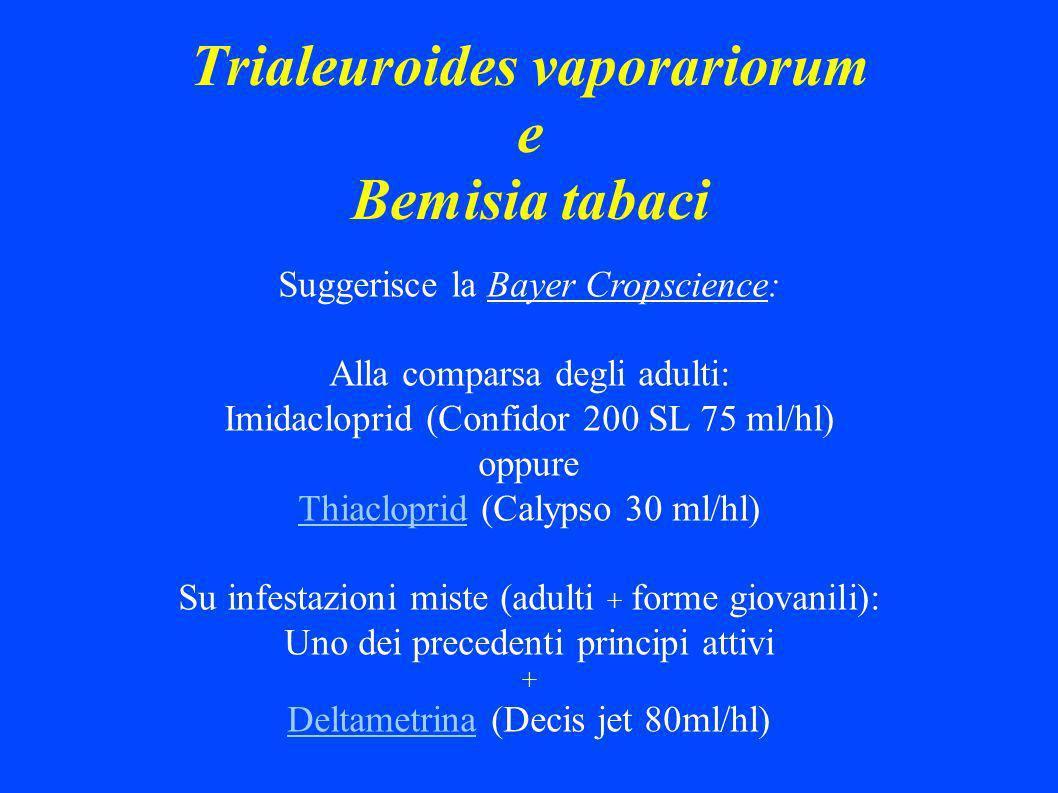 Trialeuroides vaporariorum e Bemisia tabaci Suggerisce la Bayer Cropscience: Alla comparsa degli adulti: Imidacloprid (Confidor 200 SL 75 ml/hl) oppure Thiacloprid (Calypso 30 ml/hl) Su infestazioni miste (adulti + forme giovanili): Uno dei precedenti principi attivi + Deltametrina (Decis jet 80ml/hl)