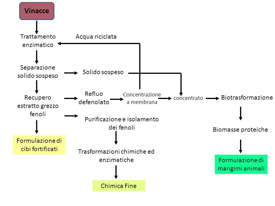 Vinacce Trattamento enzimatico Recupero estratto grezzo fenoli Formulazione di cibi fortificati Purificazione e isolamento dei fenoli Trasformazioni c