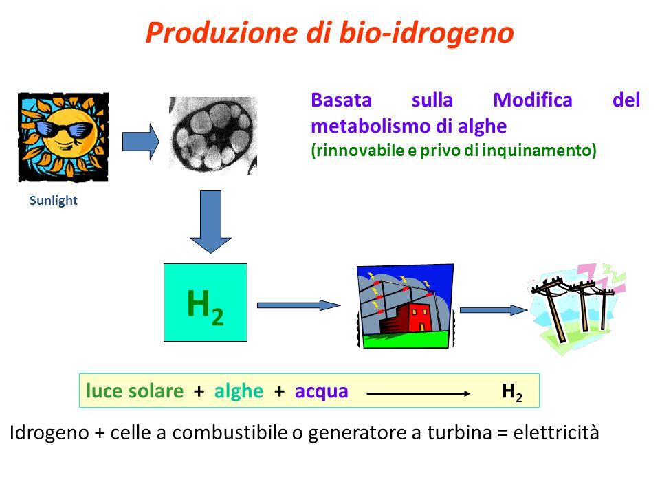 Sunlight Basata sulla Modifica del metabolismo di alghe (rinnovabile e privo di inquinamento) H2H2 Produzione di bio-idrogeno luce solare + alghe + ac