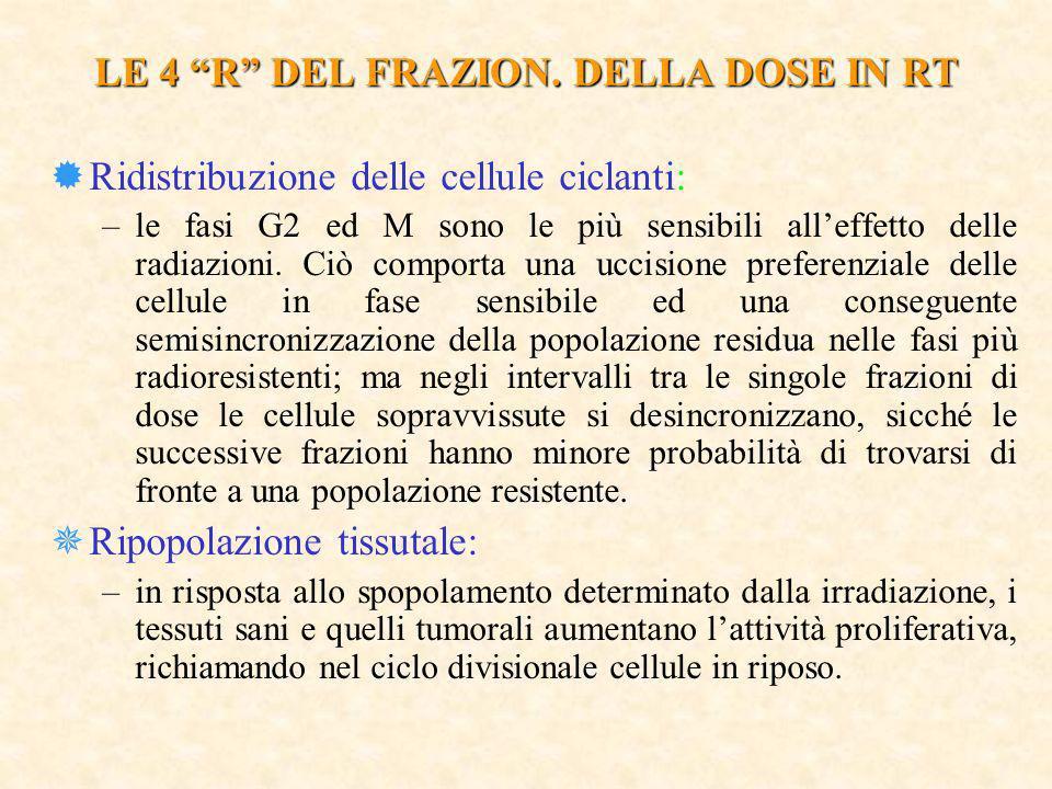 LE 4 R DEL FRAZION. DELLA DOSE IN RT ®Ridistribuzione delle cellule ciclanti: –le fasi G2 ed M sono le più sensibili alleffetto delle radiazioni. Ciò