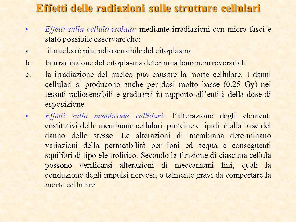 Effetti delle radiazioni sulle strutture cellulari Effetti sulla cellula isolata: mediante irradiazioni con micro-fasci è stato possibile osservare ch