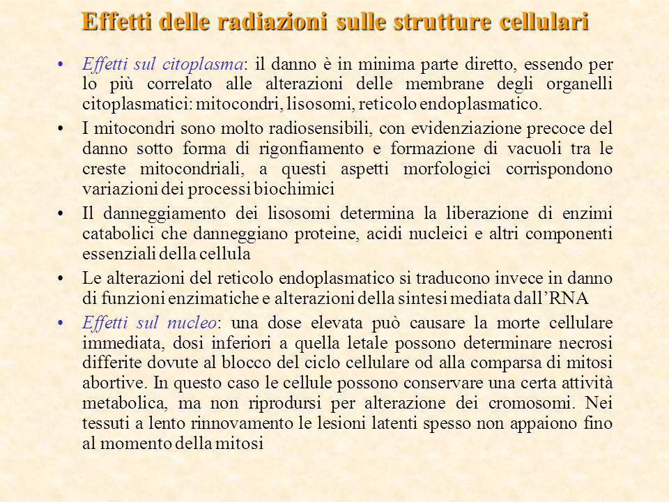 Effetti sul citoplasma: il danno è in minima parte diretto, essendo per lo più correlato alle alterazioni delle membrane degli organelli citoplasmatic
