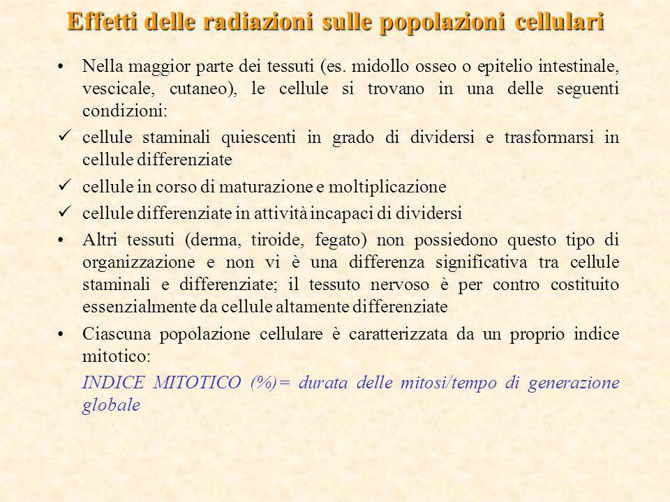 Effetti delle radiazioni sulle popolazioni cellulari Nella maggior parte dei tessuti (es. midollo osseo o epitelio intestinale, vescicale, cutaneo), l