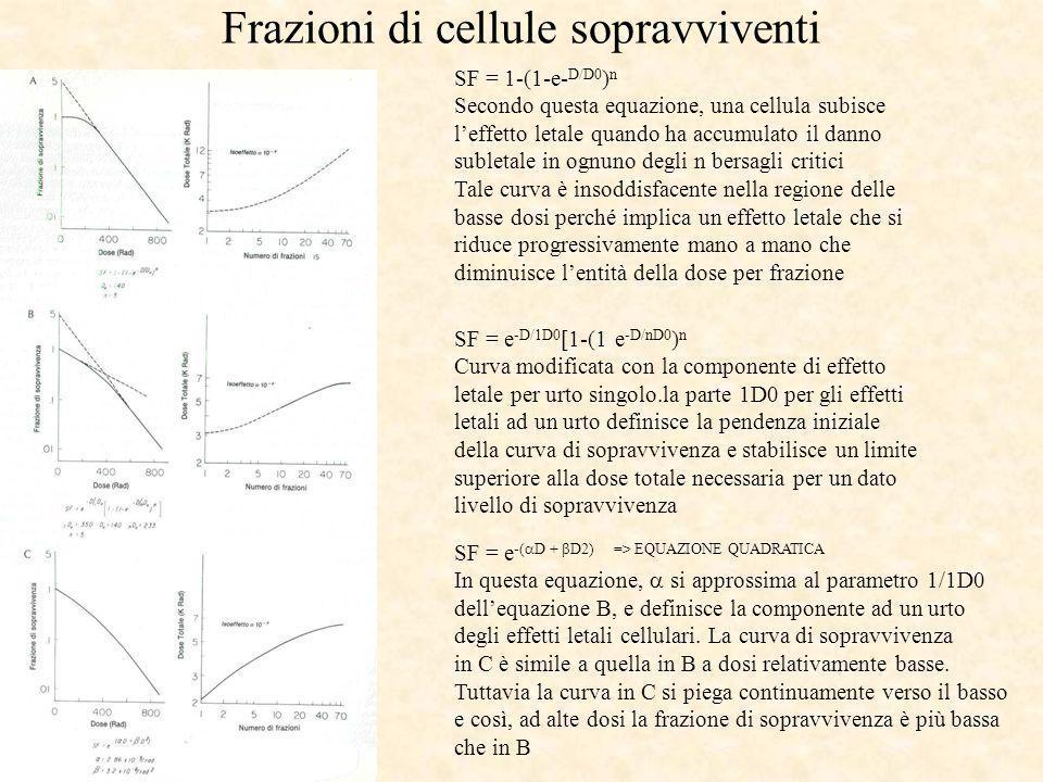 Frazioni di cellule sopravviventi SF = 1-(1-e- D/D0 ) n Secondo questa equazione, una cellula subisce leffetto letale quando ha accumulato il danno su