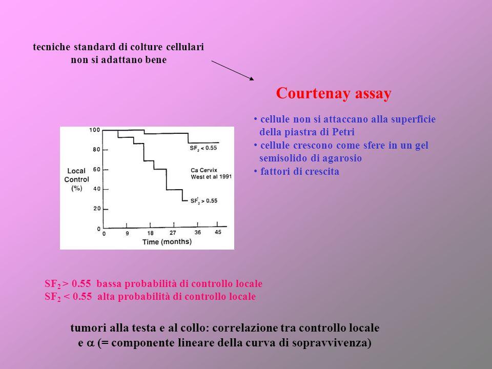 Courtenay assay tecniche standard di colture cellulari non si adattano bene cellule non si attaccano alla superficie della piastra di Petri cellule cr