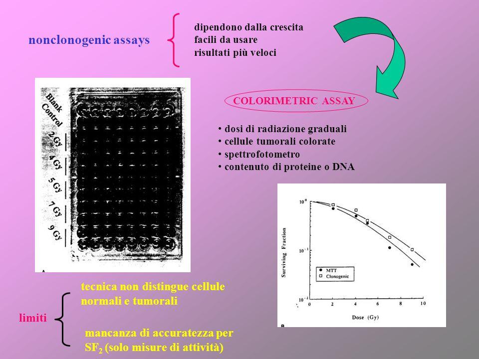 nonclonogenic assays dipendono dalla crescita facili da usare risultati più veloci COLORIMETRIC ASSAY dosi di radiazione graduali cellule tumorali col