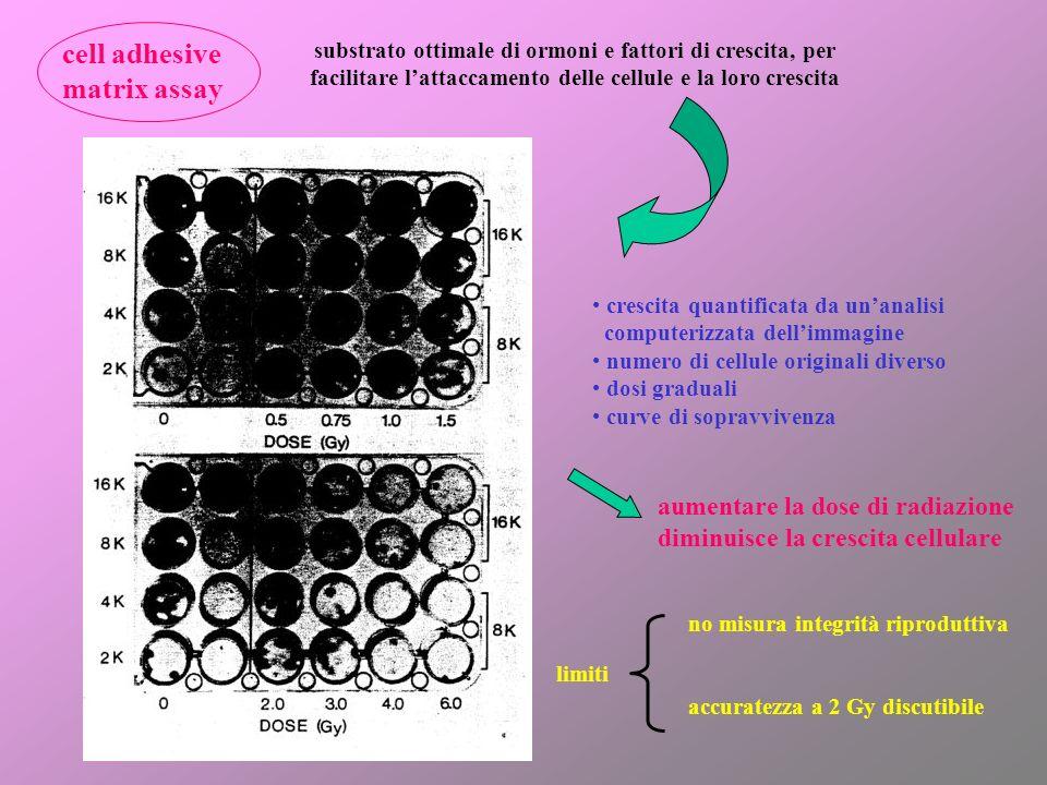 cell adhesive matrix assay substrato ottimale di ormoni e fattori di crescita, per facilitare lattaccamento delle cellule e la loro crescita crescita