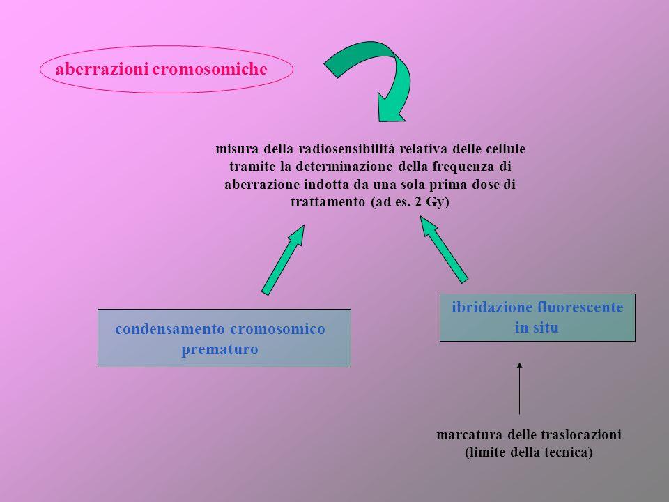 aberrazioni cromosomiche misura della radiosensibilità relativa delle cellule tramite la determinazione della frequenza di aberrazione indotta da una