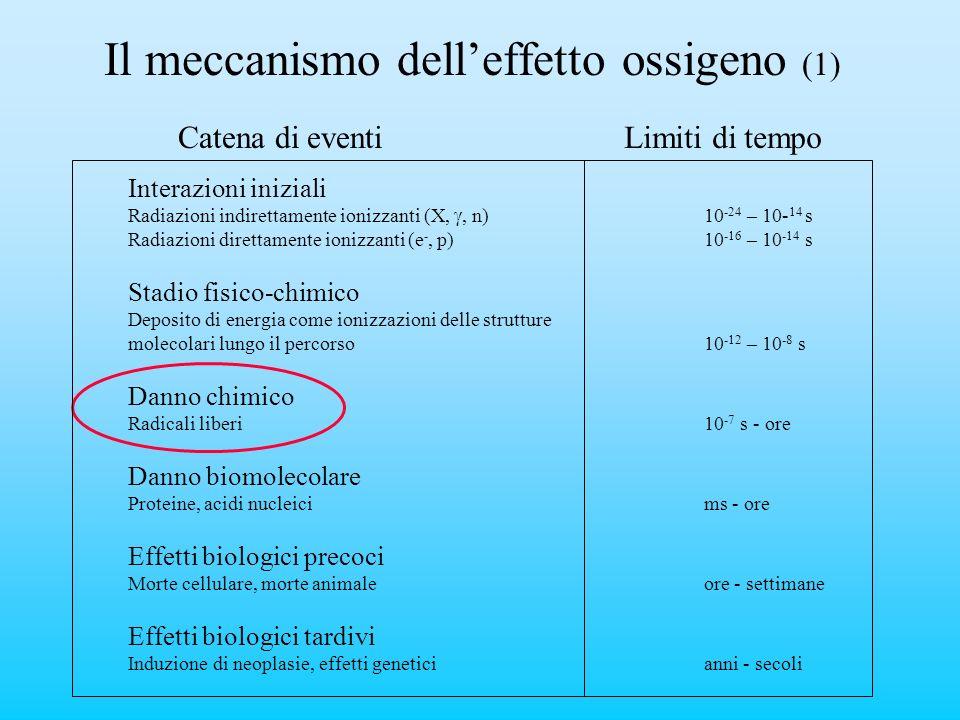 Il meccanismo delleffetto ossigeno (1) Catena di eventi Interazioni iniziali Radiazioni indirettamente ionizzanti (X,, n)10 -24 – 10- 14 s Radiazioni