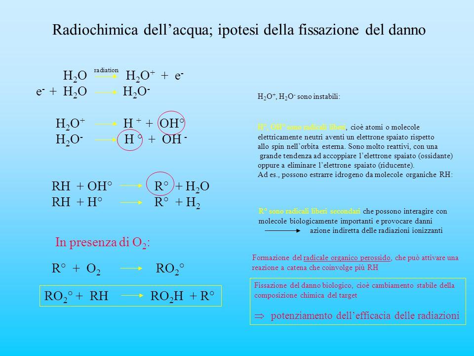 Radiochimica dellacqua; ipotesi della fissazione del danno H 2 O H 2 O + + e - e - + H 2 O H 2 O - H 2 O +, H 2 O - sono instabili: H 2 O + H + + OH°