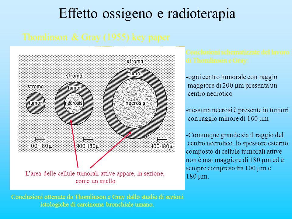 Effetto ossigeno e radioterapia Thomlinson & Gray (1955) key paper Conclusioni ottenute da Thomlinson e Gray dallo studio di sezioni istologiche di ca