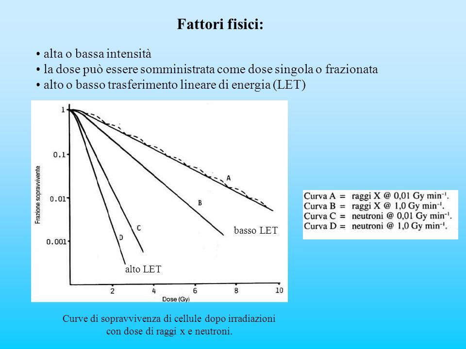 alta o bassa intensità la dose può essere somministrata come dose singola o frazionata alto o basso trasferimento lineare di energia (LET) Fattori fis