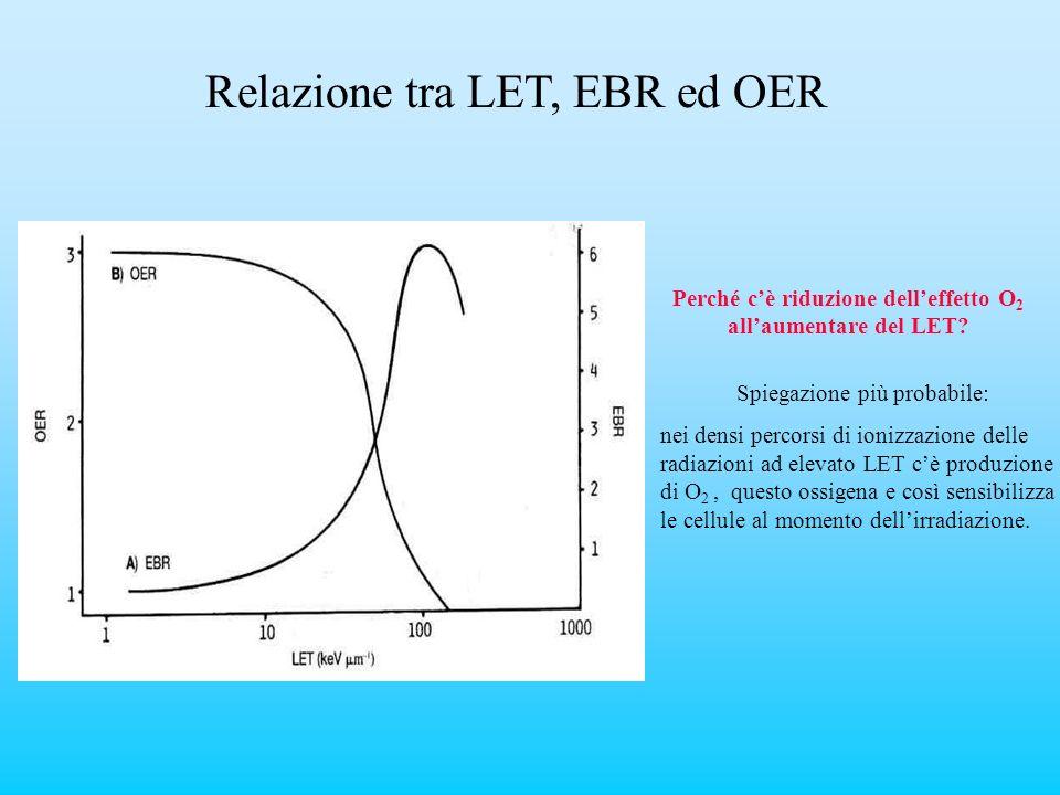 Perché cè riduzione delleffetto O 2 allaumentare del LET? Spiegazione più probabile: nei densi percorsi di ionizzazione delle radiazioni ad elevato LE