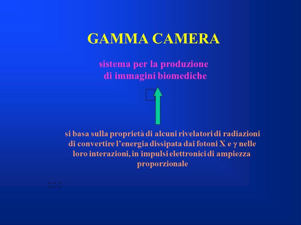 GAMMA CAMERA sistema per la produzione di immagini biomediche si basa sulla proprietà di alcuni rivelatori di radiazioni di convertire lenergia dissip