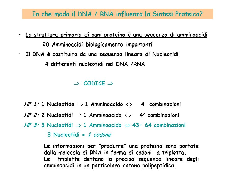 In che modo il DNA / RNA influenza la Sintesi Proteica? La struttura primaria di ogni proteina è una sequenza di amminoacidi 20 Amminoacidi biologicam
