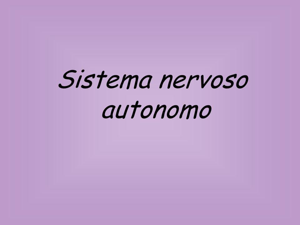Sistema nervoso periferico Sistema nervoso centrale Sezione efferente Sezione afferente Sistema autonomo Sistema somatico Parasimpatico Simpatico