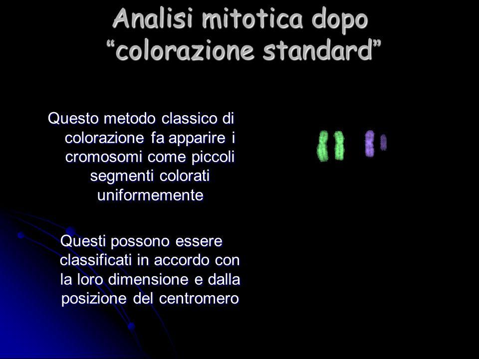 Analisi mitotica dopo colorazione standard Analisi mitotica dopo colorazione standard Questo metodo classico di colorazione fa apparire i cromosomi co