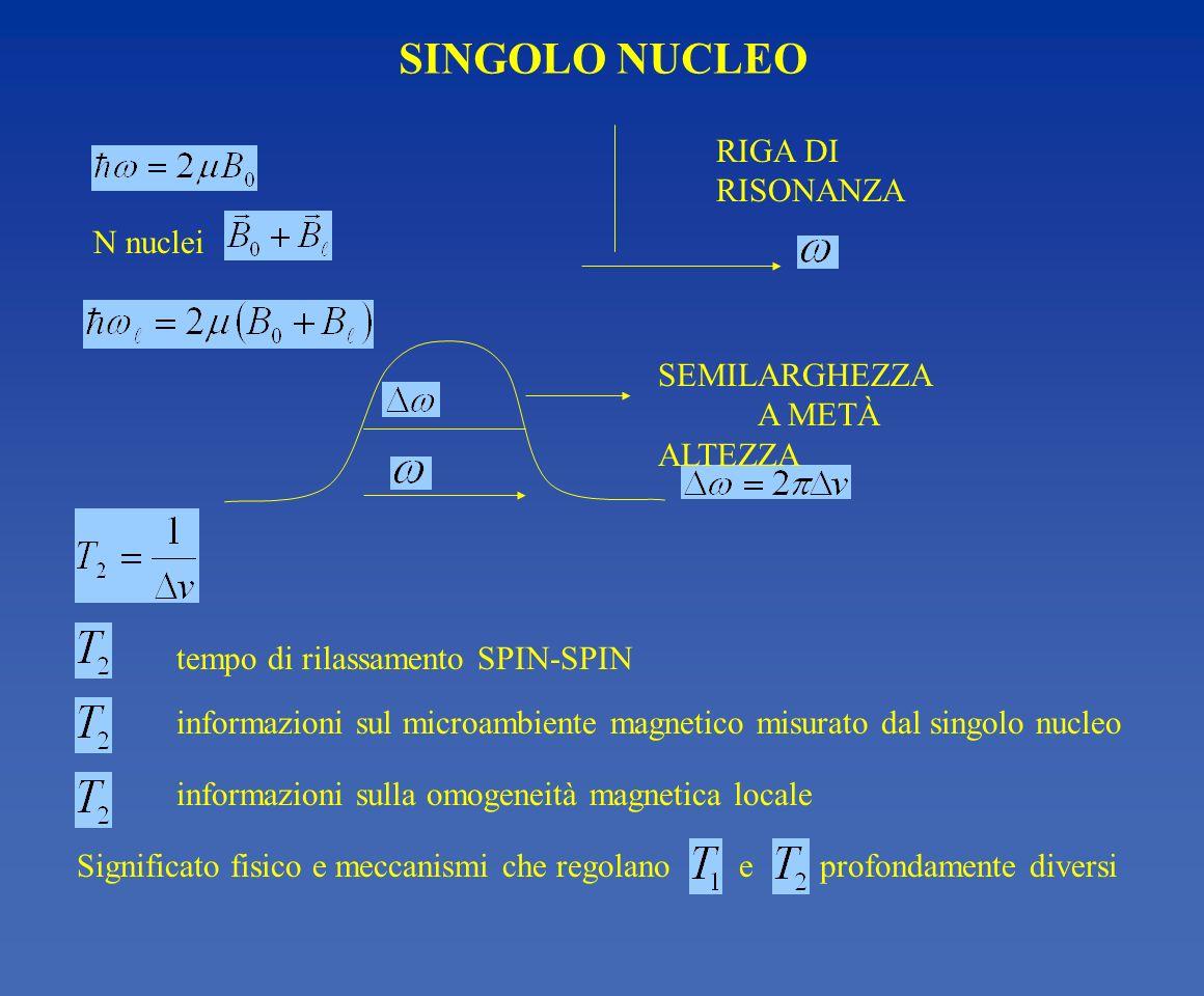 SINGOLO NUCLEO tempo di rilassamento SPIN-SPIN informazioni sul microambiente magnetico misurato dal singolo nucleo informazioni sulla omogeneità magn
