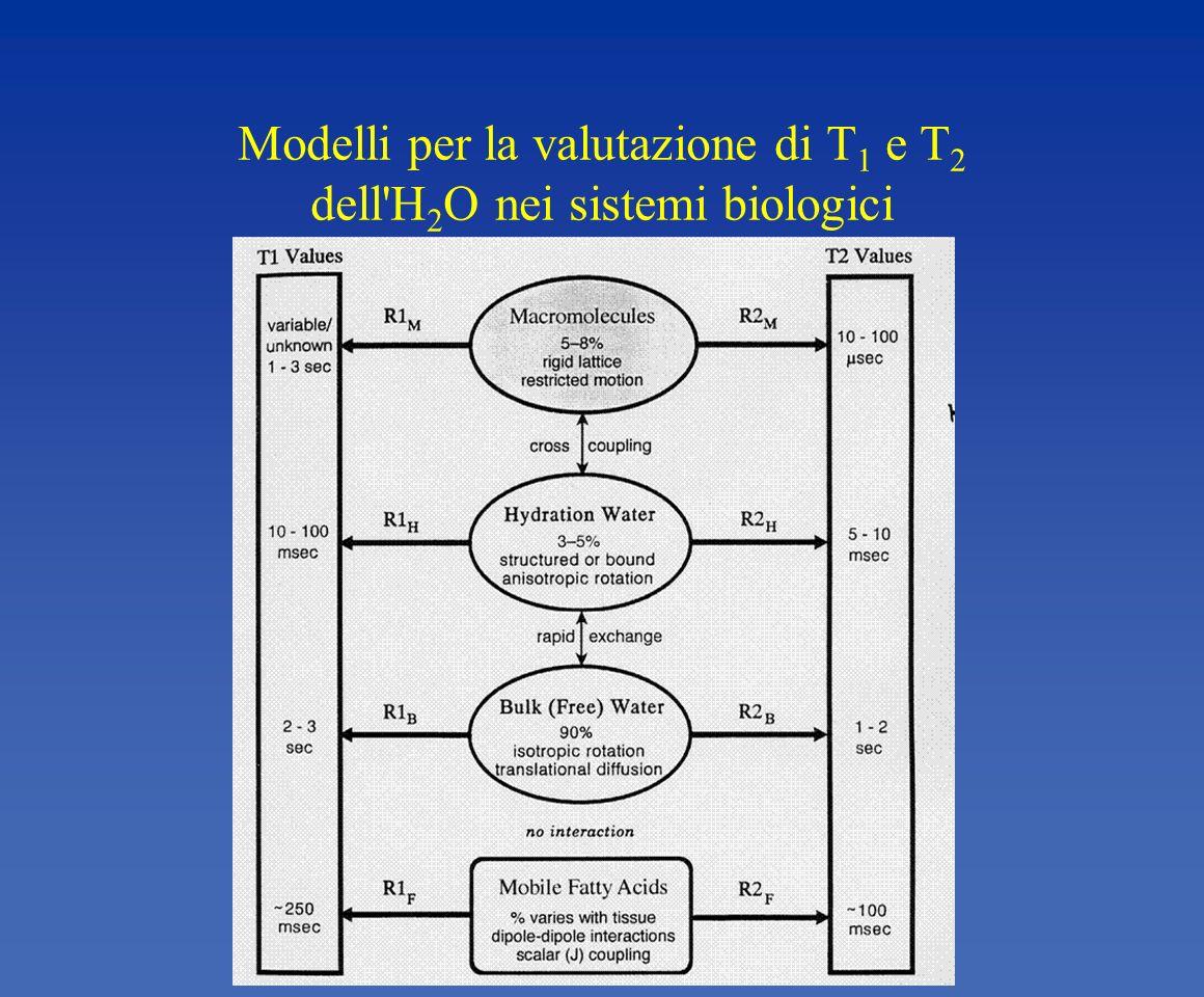 Modelli per la valutazione di T 1 e T 2 dell'H 2 O nei sistemi biologici