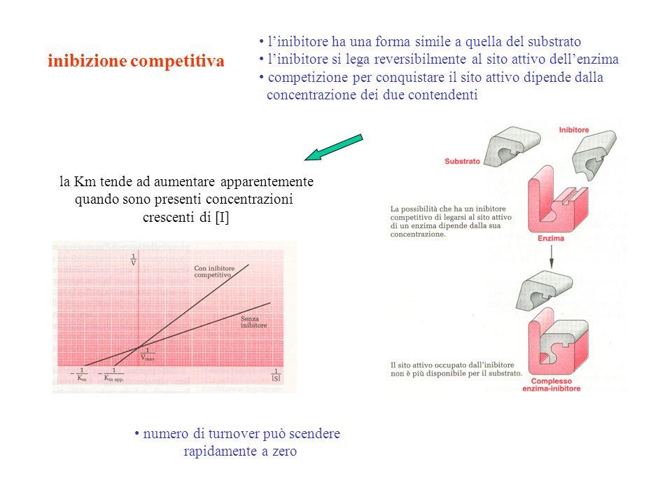 inibizione competitiva numero di turnover può scendere rapidamente a zero linibitore ha una forma simile a quella del substrato linibitore si lega rev