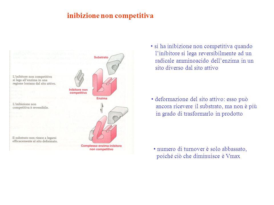 inibizione non competitiva si ha inibizione non competitiva quando linibitore si lega reversibilmente ad un radicale amminoacido dellenzima in un sito
