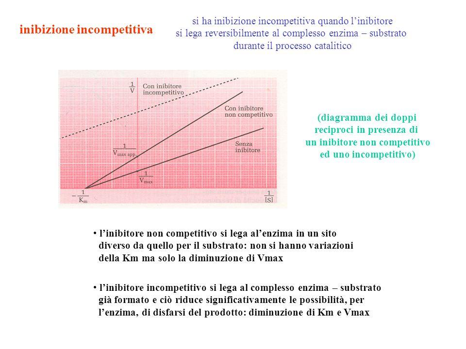 inibizione incompetitiva si ha inibizione incompetitiva quando linibitore si lega reversibilmente al complesso enzima – substrato durante il processo