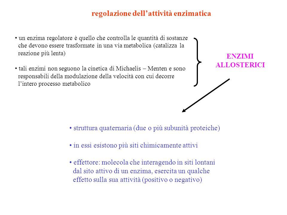 regolazione dellattività enzimatica un enzima regolatore è quello che controlla le quantità di sostanze che devono essere trasformate in una via metab