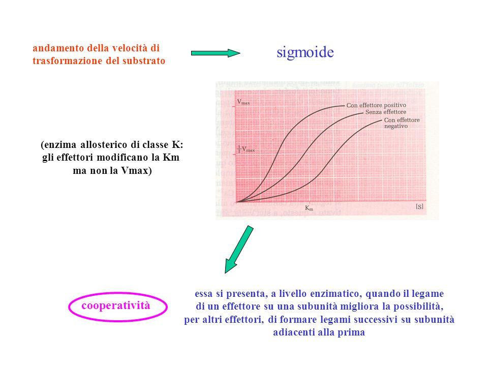 andamento della velocità di trasformazione del substrato sigmoide (enzima allosterico di classe K: gli effettori modificano la Km ma non la Vmax) coop