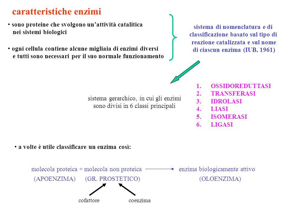 enzimi: catalizzatori biologici 1.alla fine della reazione, le proteine enzimatiche devono conservare la loro struttura immodificata e pronta per riprendere lattività catalitica 2.