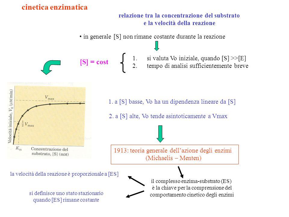 la relazione tra [S] e la velocità della reazione enzimatica può essere espressa in modo quantitativo Equazione di Michaelis - Menten 1.Km = (K 2 + K -1 ) / K 1 2.un solo substrato definizione pratica di Km: in genere Km è una funzione complessa; se però K 2 << K 1 essa può essere considerata la misura dellaffinità di un enzima per il substrato: più è alta Km, minore è laffinità