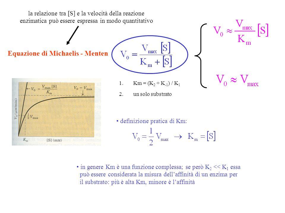 interpretazione dei termini Vmax e Km (equazione di Lineweaver – Burk) grafico dei doppi reciproci: retta con pendenza Km/Vmax intercetta asse x intercetta asse y -1/Km 1/Vmax Vmax = K 2 [Et] si definisce una costante di velocità per descrivere la tappa che limita la velocità di una reazione catalizzata numero di turnover numero di molecole di substrato che viene convertito in prodotto nellunità di tempo da una singola molecola enziamatica, quando è saturata con il substrato