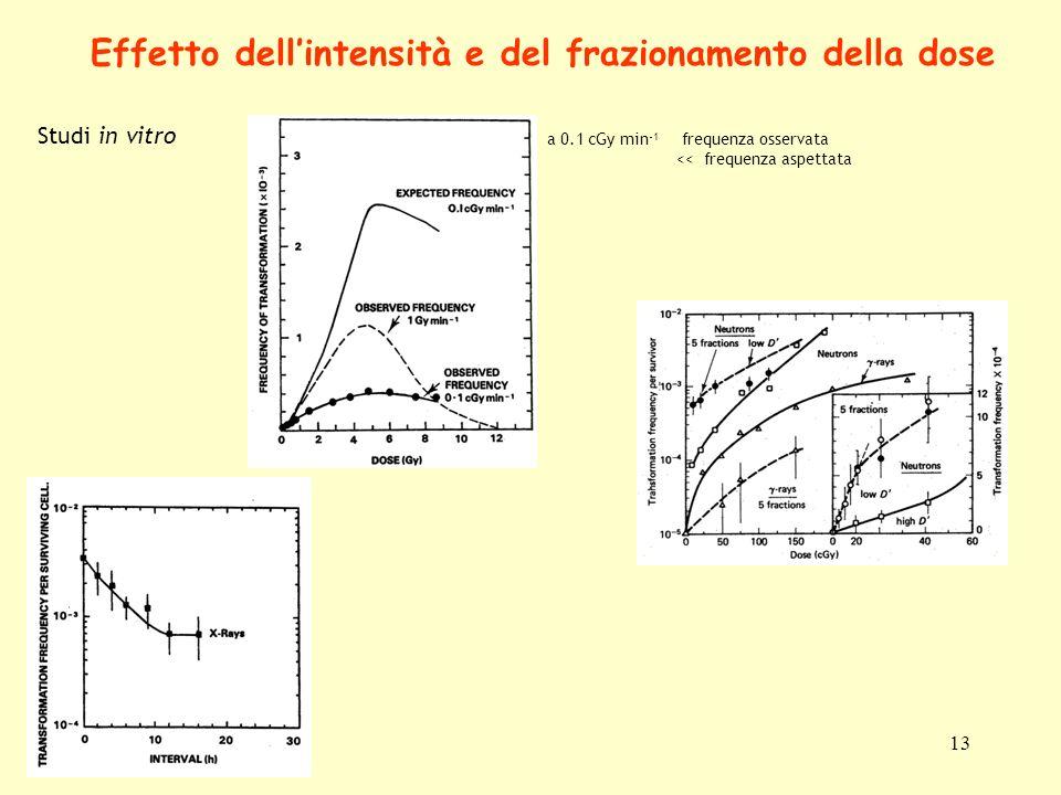 13 Studi in vitro a 0.1 cGy min -1 frequenza osservata << frequenza aspettata Effetto dellintensità e del frazionamento della dose