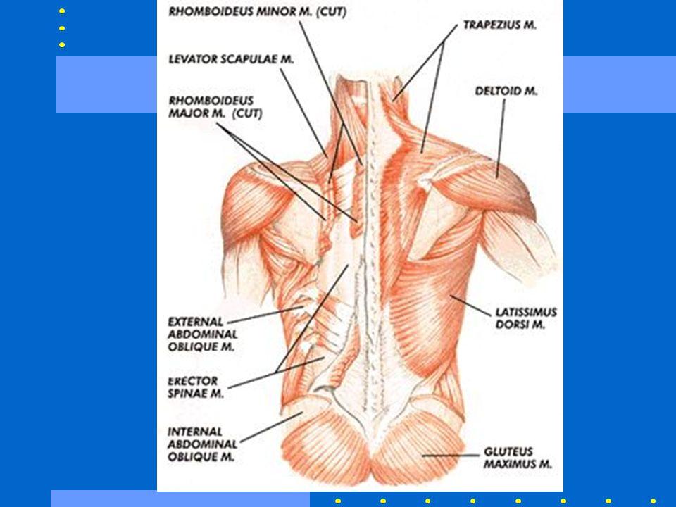 Cause della Low Back Pain Stiramento o distorsione – 70% Alterazioni degenerative – 10% Ernia del disco – 4% Osteoporosi, fratture sp.– 4% Stenosi spinale – 3% Spondilolistesi– 2%