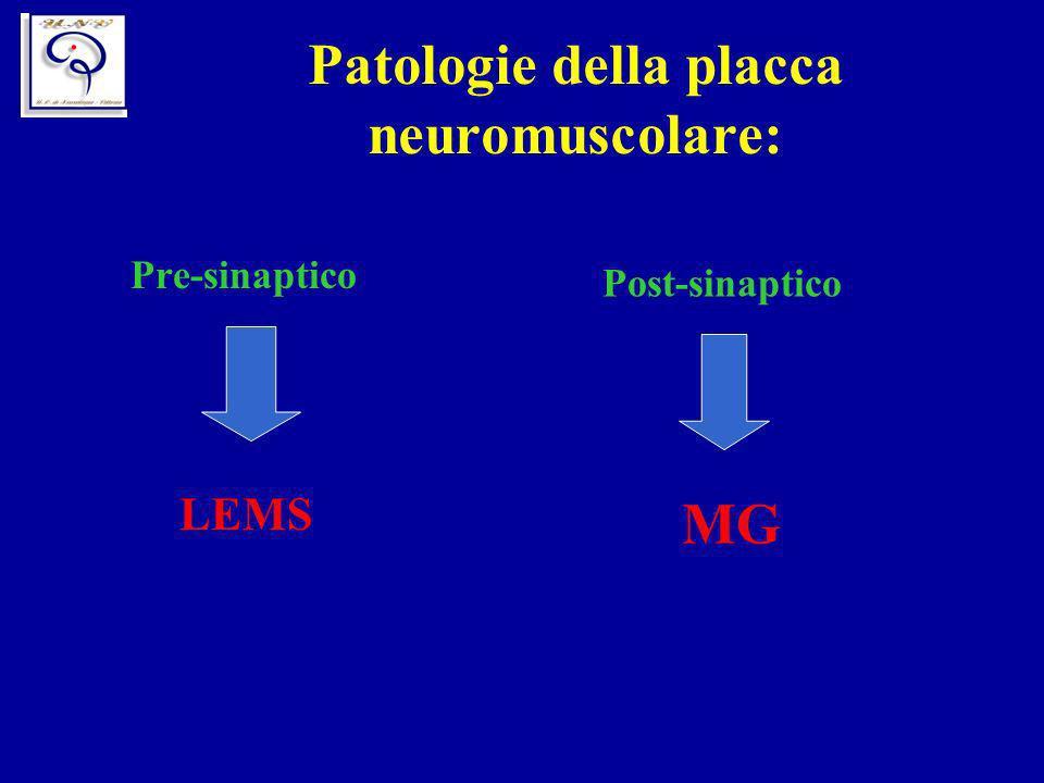 Patologie della placca neuromuscolare: Pre-sinaptico LEMS Post-sinaptico MG