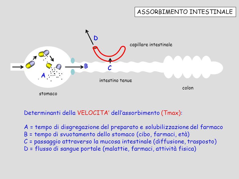 ASSORBIMENTO INTESTINALE stomaco intestino tenue colon............................... capillare intestinale A B C D Determinanti della VELOCITA dellas