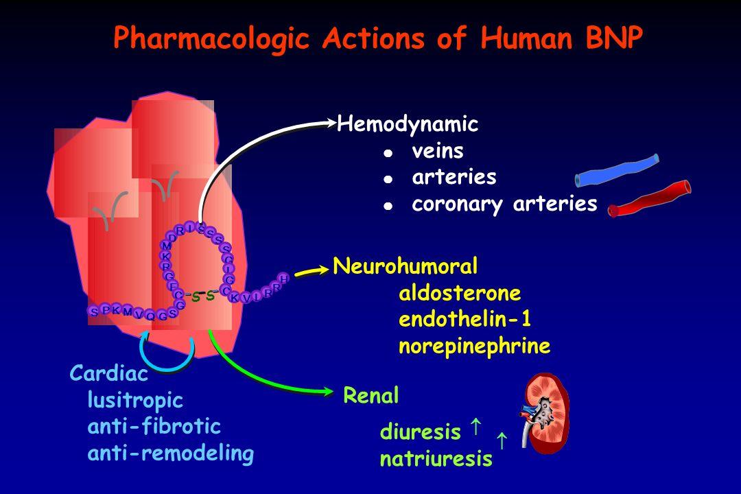 da: Storti et al, Clin Chem Lab Med 2004; 42: 1178-1185 AxSYM BNP: sensibilità analitica Media + 3 d.s.: 5,6 + 4,8 Range: 1,8 - 12,6