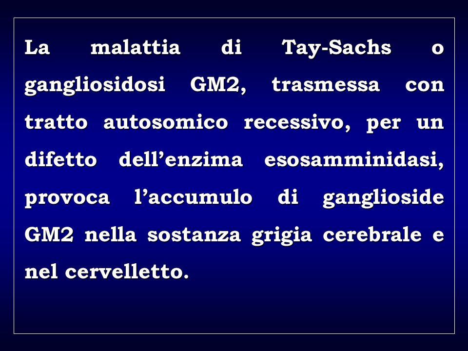 a aa a aa La malattia di Tay-Sachs o gangliosidosi GM2, trasmessa con tratto autosomico recessivo, per un difetto dellenzima esosamminidasi, provoca laccumulo di ganglioside GM2 nella sostanza grigia cerebrale e nel cervelletto.