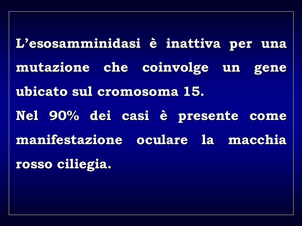a aa a aa Lesosamminidasi è inattiva per una mutazione che coinvolge un gene ubicato sul cromosoma 15. Nel 90% dei casi è presente come manifestazione