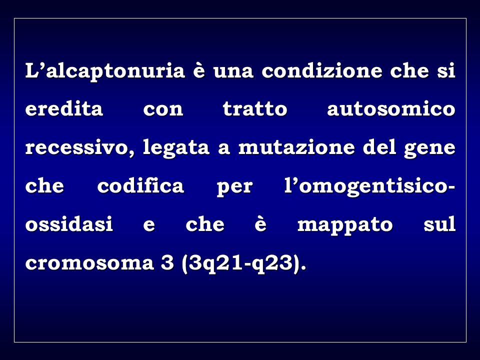 a aa a aa Lalcaptonuria è una condizione che si eredita con tratto autosomico recessivo, legata a mutazione del gene che codifica per lomogentisico- ossidasi e che è mappato sul cromosoma 3 (3q21-q23).