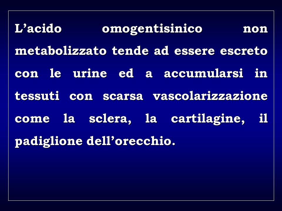 a aa a aa Lacido omogentisinico non metabolizzato tende ad essere escreto con le urine ed a accumularsi in tessuti con scarsa vascolarizzazione come l