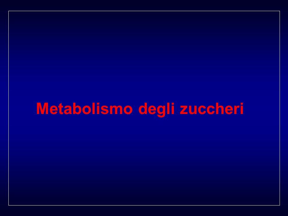 Metabolismo degli zuccheri