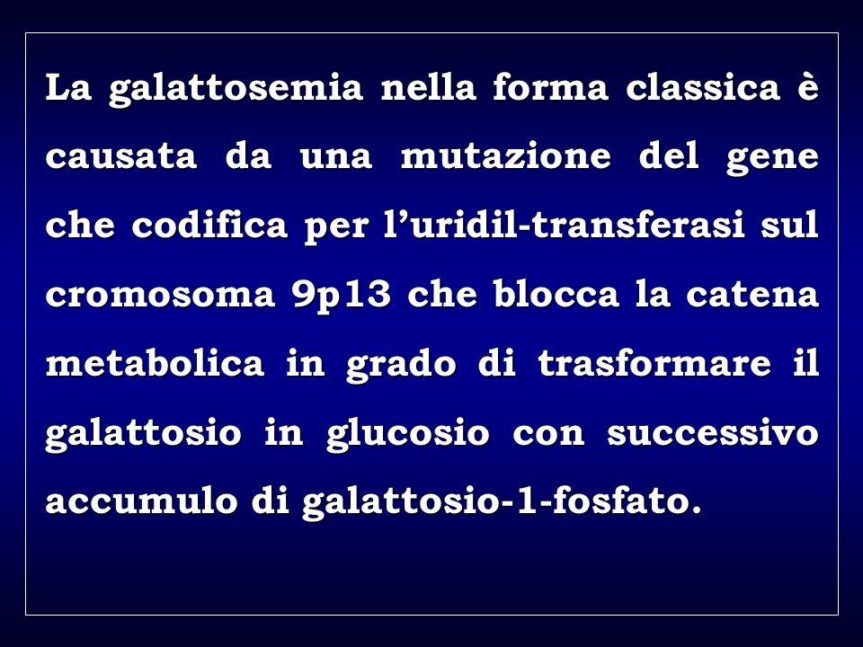 a aa a aa La galattosemia nella forma classica è causata da una mutazione del gene che codifica per luridil-transferasi sul cromosoma 9p13 che blocca la catena metabolica in grado di trasformare il galattosio in glucosio con successivo accumulo di galattosio-1-fosfato.