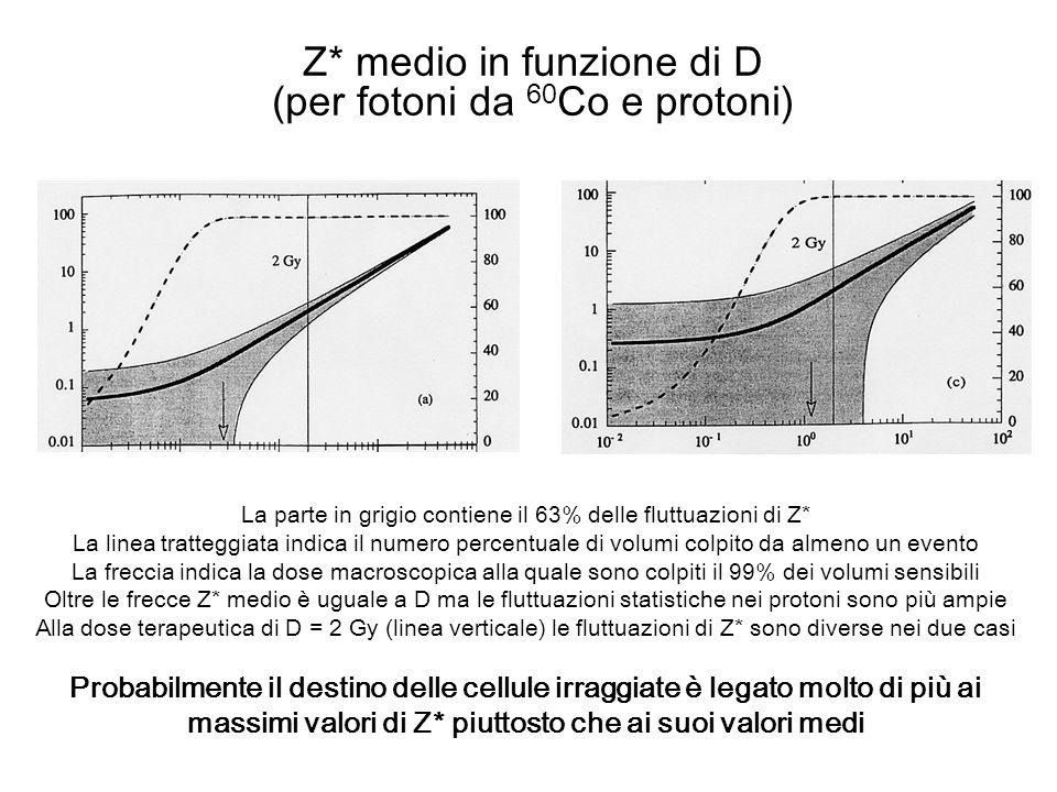 Z* medio in funzione di D (per fotoni da 60 Co e protoni) La parte in grigio contiene il 63% delle fluttuazioni di Z* La linea tratteggiata indica il