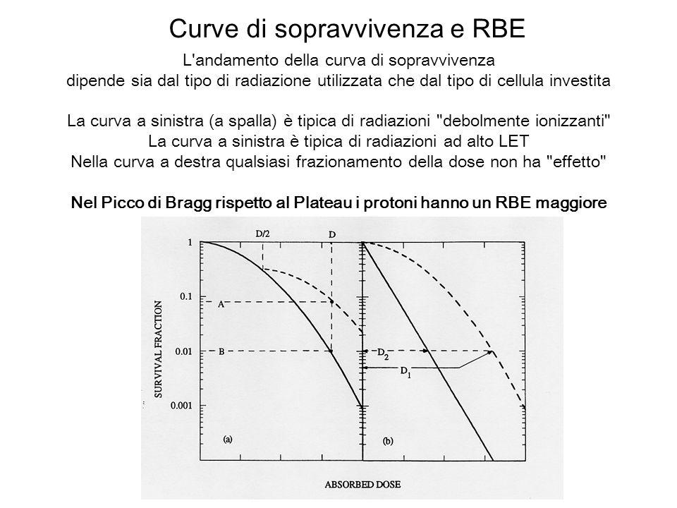 Curve di sopravvivenza e RBE L'andamento della curva di sopravvivenza dipende sia dal tipo di radiazione utilizzata che dal tipo di cellula investita