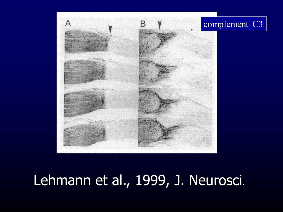 Lehmann et al., 1999, J. Neurosci. complement C3