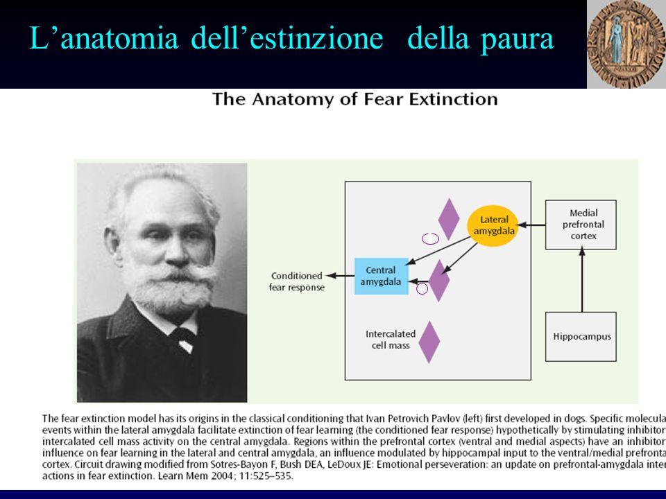 Lanatomia dellestinzione della paura - +