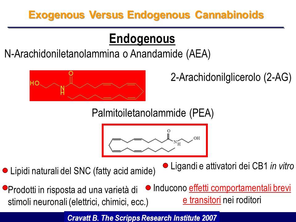 Gli effetti psicogeni dei cannabinoidi (fitocannabinoidi) costituiscono un insormontabile ostacolo allo sviluppo di farmaci attivi sui recettori CB1 e CB2 Cannabinoidi ed Effetti Collaterali È stato perciò naturale lo sviluppo di un grande interesse scientifico ed applicativo per gli endocannabinoidi ed il loro metabolismo