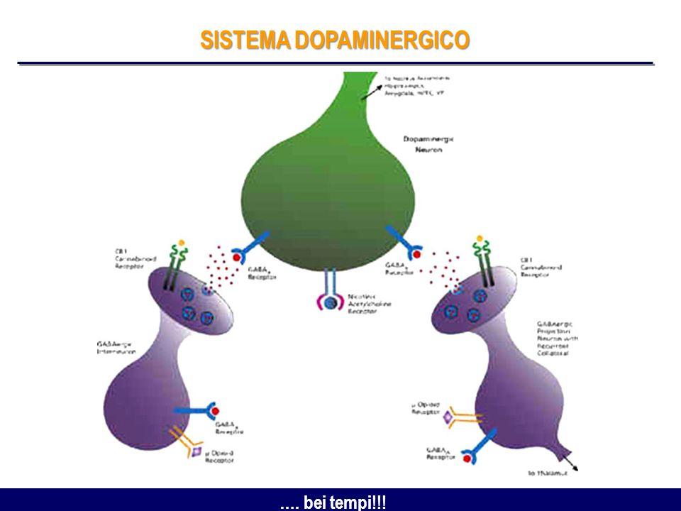 Recettori per i Cannabinoidi (CB1) Localizzazione Oculare dei CB1 Meccanismo dAzione Epitelio corneale Endotelio del segmento anteriore Canale di Schlemm Epitelio ciliare Muscolo ciliare Trabecolato Cellule Gangliari Retiniche Fotorecettori Potenziano la fotosensibilità Influenzano leccitabilità neuronale nel pathway visivo (modulando le correnti di Ca + e K + ) Modulano il rilascio di neurotrasmettitori dalle sinapsi del sistema visivo (essendo localizzati sulle terminazioni nervose dei fotorecettori) Straiker AJ, IOVS, 1999; Yazulla S, Vis Neurosci, 2000; Straiker A, J Neurophysiol, 2003; Stamer WD, Eur J Pharmacol, 2001
